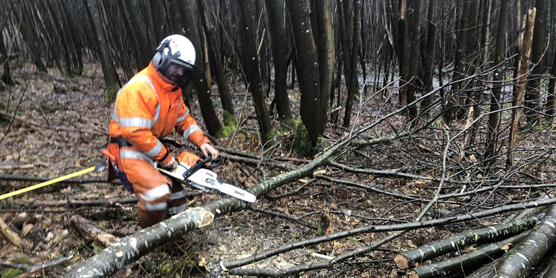 man with chainsaw in forest cutting tree
